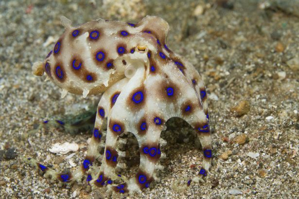 Phượt thủ đùa giỡn với bạch tuộc siêu độc, giết người trong phút chốc