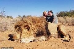 Chụp ảnh hôn nhau bên con sư tử đã chết, cặp đôi bị chỉ trích gay gắt