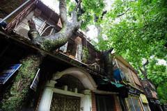 Khu tập thể có 'cây mọc xuyên nhà' ở Hà Nội