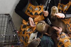 Chán chó và mèo, giới trẻ Trung Quốc chuyển sang nuôi chồn, nhện, rắn