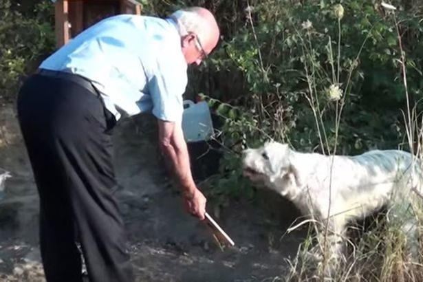 Chú chó trung thành quyết 'bám trụ' nơi chủ qua đời