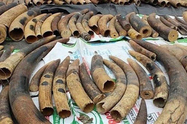 Hai Phong Police prosecute ivory, pangolin scale traffickers