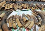 Hai Phong Police prosecute ivory, pangolin scale traffickers