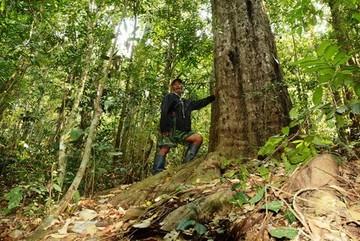 Người giữ 'kho báu' rừng thông đỏ trên núi Voi