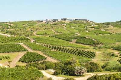 Vườn nho tạo ra rượu ngon hàng đầu thế giới