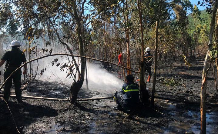 Bán đảo Sơn Trà bốc cháy dữ dội, cột khói cao hàng chục mét