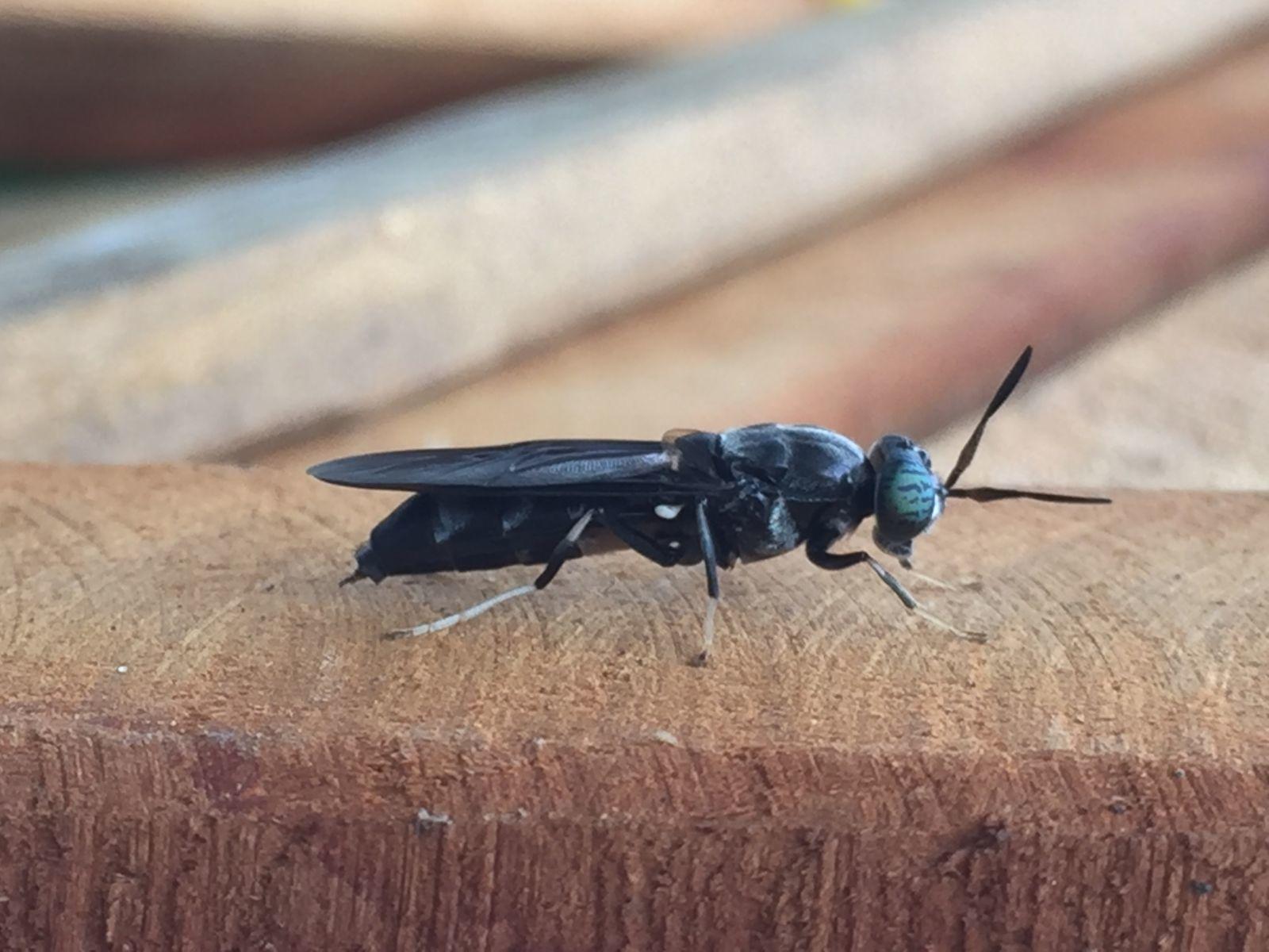 nuôi ruồi,Đồng Tháp