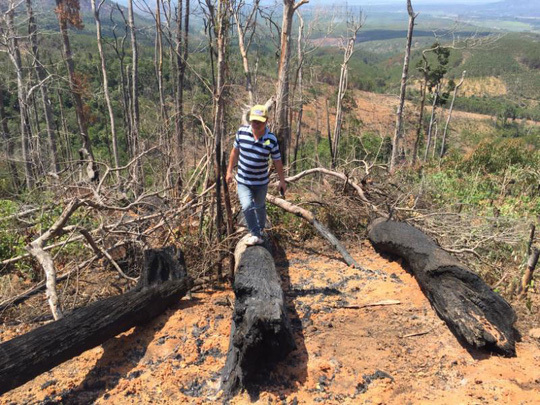 VN forests shrink as more people use land for agricultural production