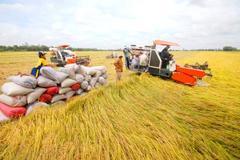 Vietnam's rice exports to China plunge