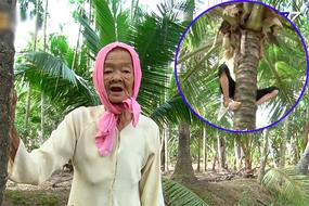 Thán phục cụ bà Trà Vinh 77 tuổi leo dừa thoăn thoắt