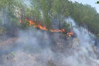Four charged over forest fires in Ha Tinh