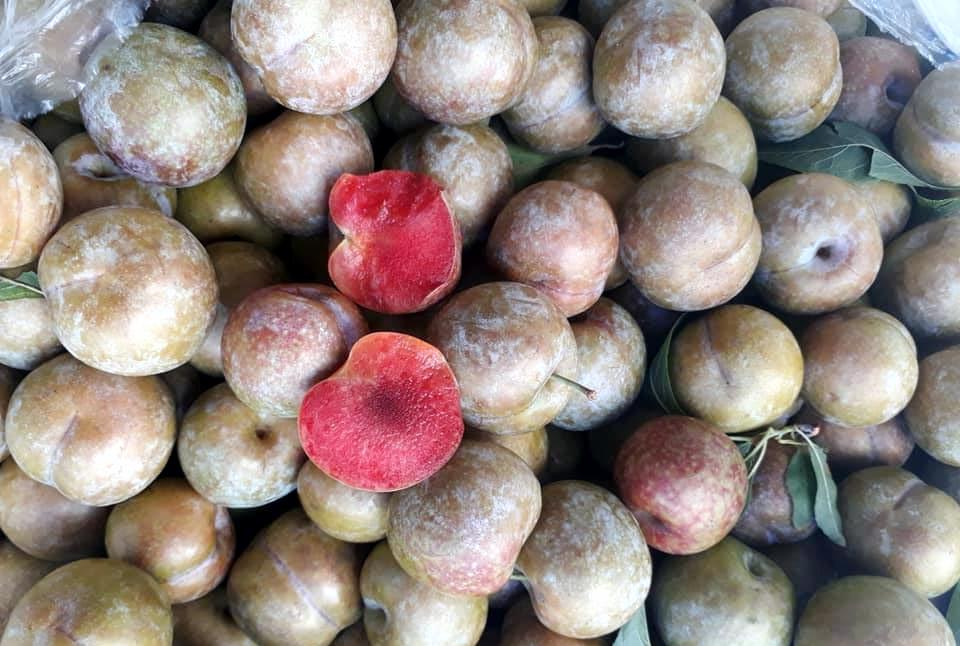 Lừa bán đặc sản Sa Pa, dân Việt ăn hết 3.000 tấn mận Tàu