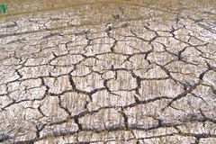 Binh Dinh experiences most serious drought in 15 years