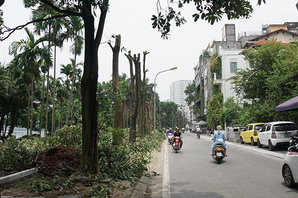 Hà Nội,hoa sữa,bãi rác Nam Sơn