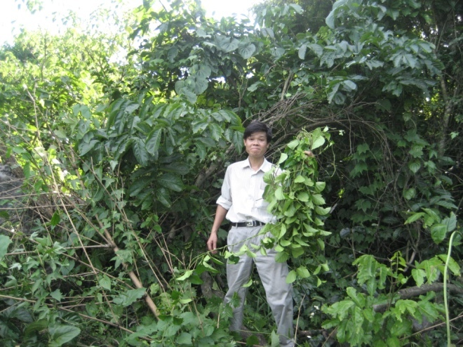 The scientist who dreams of making Vietnam an herbal medicine center