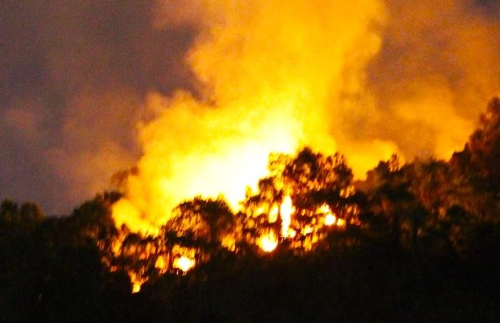 cháy rừng,Đà Nẵng