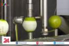 Độc đáo máy gọt vỏ chanh 3 tấn mỗi ngày