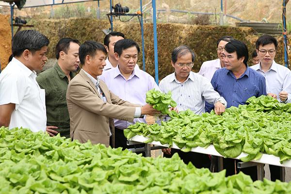 Hơn nửa nông dân tham gia HTX tăng thu nhập 20%