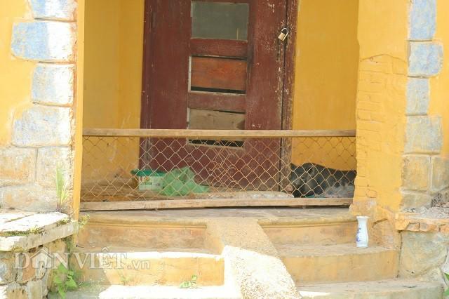 Kỳ lạ biệt thự cổ ở Đà Lạt chỉ để nuôi lợn