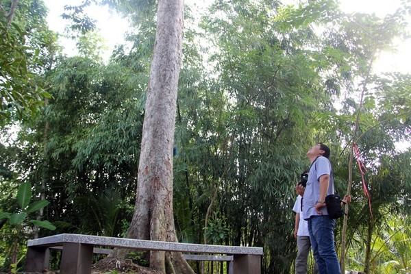 Độc nhất Việt Nam, cây sầu riêng 100 tuổi 2 người ôm không xuể