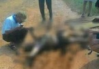 Hai vợ chồng ở Thái Bình bị điện giật tử vong khi tưới cây