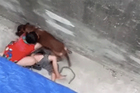BV thông tin cụ bà 77 ở Hà Nội tuổi bị chó becgie cắn phải nhập viện cấp cứu