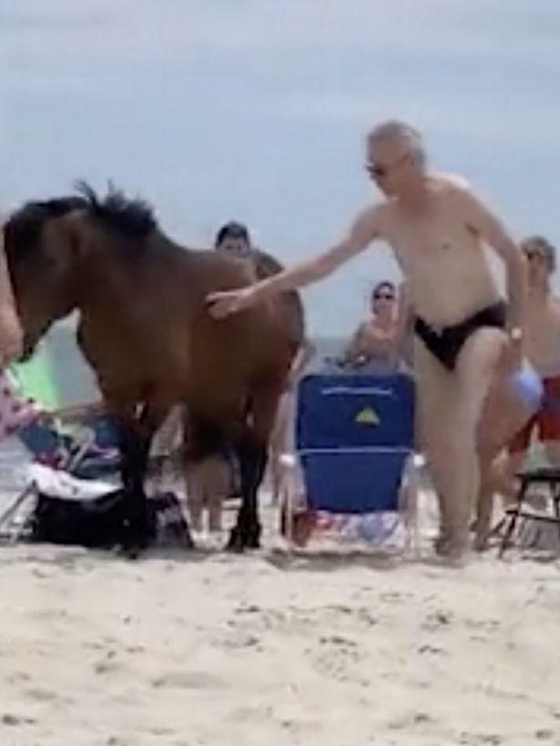 Mỹ,biển,bãi biển,động vật hoang dã,động vật,ngựa,hi hữu