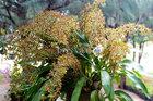 Anh giáo dạy võ trồng lan vạn người mê, hoa nở chi chít nghìn bông