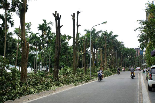 Hanoi removes more than 100 trees for unpleasant odour