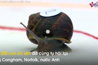 Xem ốc sên chạy nhanh nhất thế giới