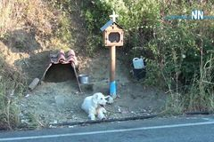 Chủ chết vì tai nạn giao thông, chú chó kiên quyết đứng chờ suốt 2 năm
