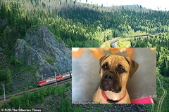 Bị ruồng bỏ, chú chó trung thành vừa đi vừa khóc 200km tìm về nhà cũ