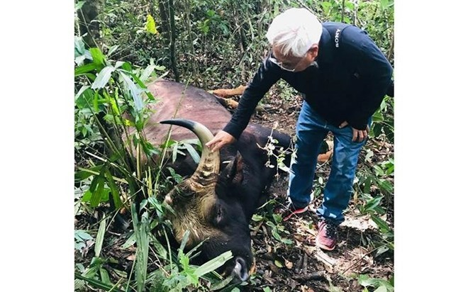 Bison bull found dead at Dong Nai natural reserve