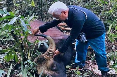 Bò tót đực nặng 800kg chết trong rừng sâu khu bảo tồn ở Đồng Nai