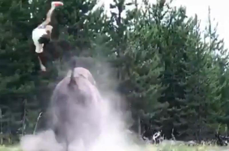 Bò rừng bất ngờ lao tới húc tung bé gái lên không