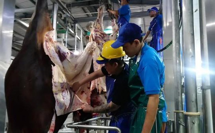 Bất ngờ 1.600 con trâu bò Úc mất dấu tại Việt Nam