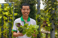 Hệ thống trồng rau sạch tự động 'siêu' tiết kiệm diện tích tại Sài Gòn