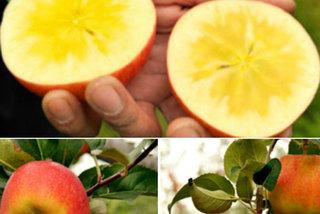 1,5 triệu một kg táo mật Nhật Bản bán tại Việt Nam