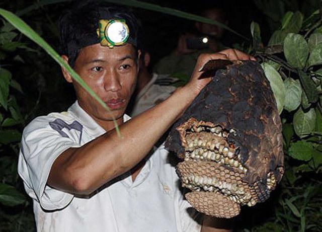Độc nhất Quảng Ngãi: Nuôi bộ sưu tập loài 'tử thần' la liệt vườn nhà