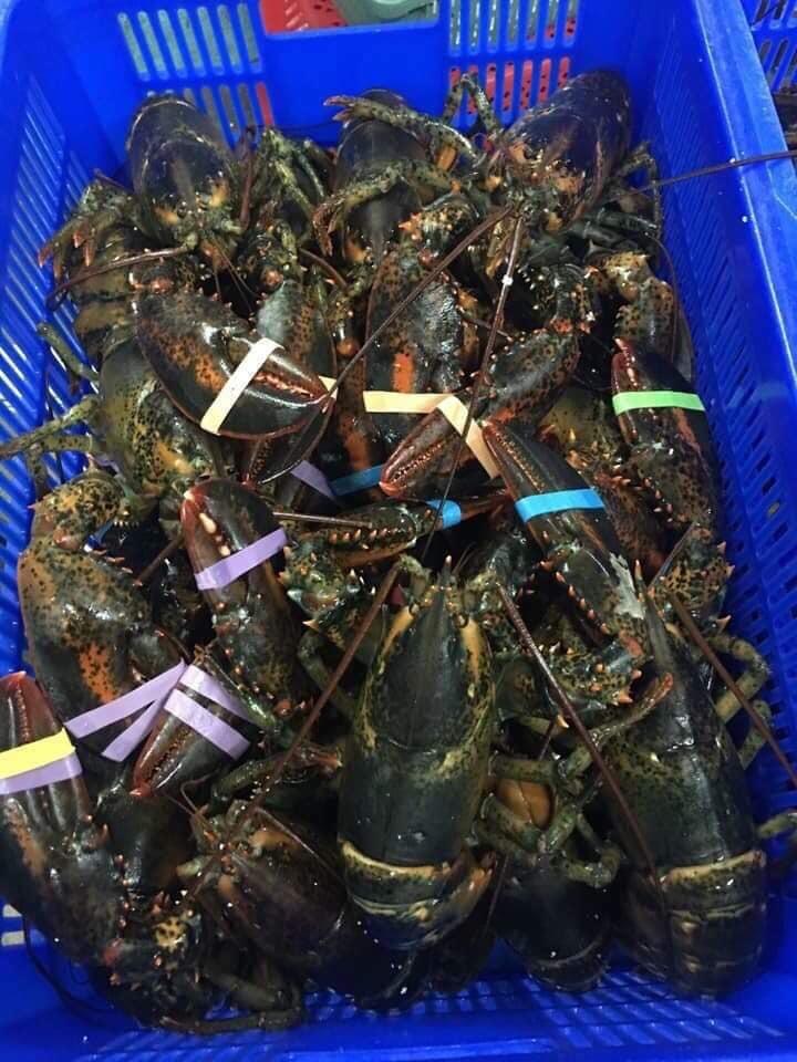 Tình huống đặc biệt, dân Việt cả năm ăn hải sản cao cấp giá rẻ