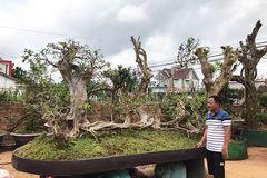 Người đàn ông biến cây mọc trong rừng thành tác phẩm có giá hơn tỷ