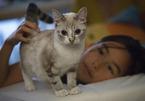Ngại kết hôn, sợ cô đơn, giới trẻ Trung Quốc nuôi thú cưng như con
