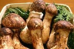 Mùa ăn chay bàng hoàng với những cây nấm giá khoảng 5 chỉ vàng/kg