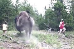 Clip gây sốc: Đi chơi công viên cùng gia đình, bé gái bị bò rừng tấn công, bố mẹ chỉ biết bỏ chạy thoát thân