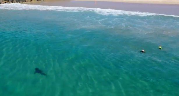 Cá mập,Australia,biển,bãi biển,săn mồi,rình mò,trẻ em,động vật