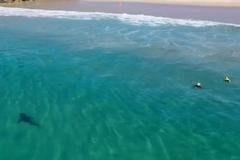 Cá mập trắng khổng lồ lượn sát trẻ em ngay gần bờ