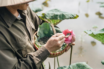 Organic lotus tea start-up focuses on quality first