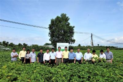 Vinasoy đạt bước tiến mới trong nghiên cứu và chọn tạo giống đậu nành