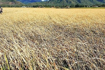Central Vietnam seriously affected by drought