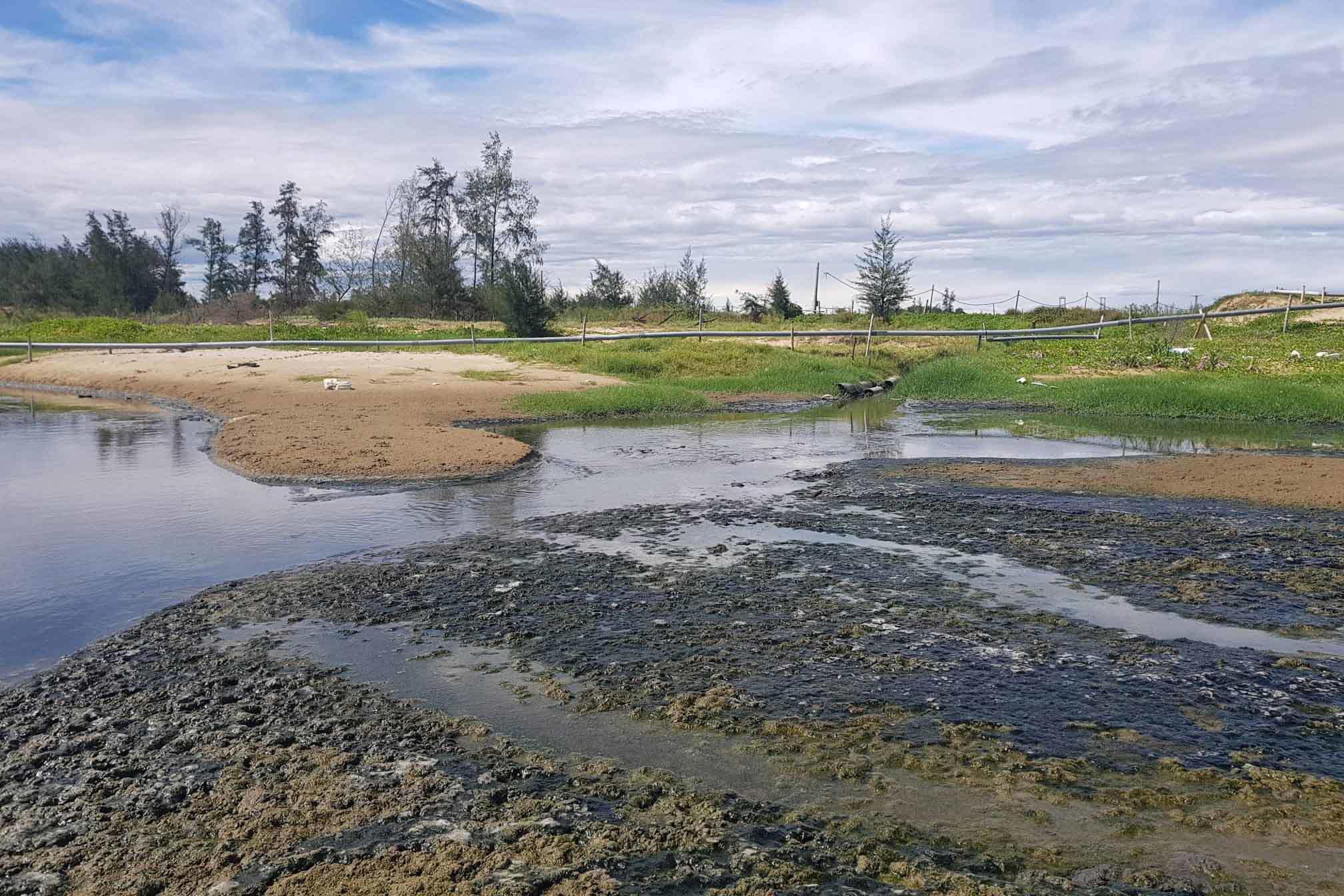 Bờ biển ở Hà Tĩnh bốc mùi vì trại tôm xả thải